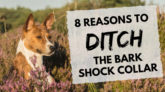 8 reasons to ditch the bark shock collar