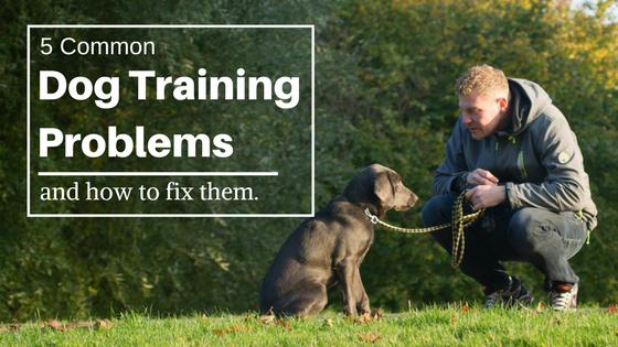dog training problems
