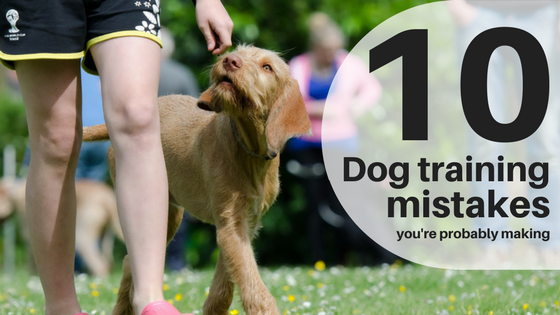 dog training mistakes