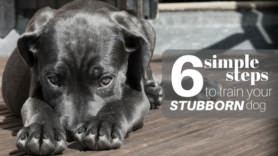 how to train your stubborn dog