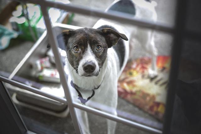 dog front door greeting