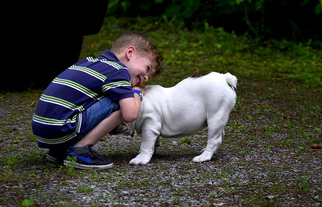 english bulldog great with kids