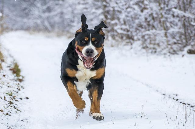 hyper dog running