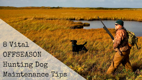 8 Vital Offseason Hunting Dog Maintenance Tips