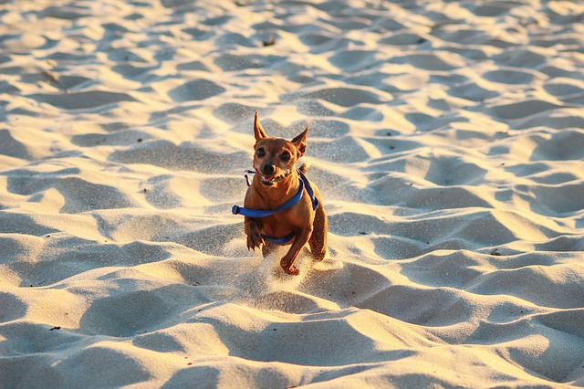 Dog PLaying in Sand