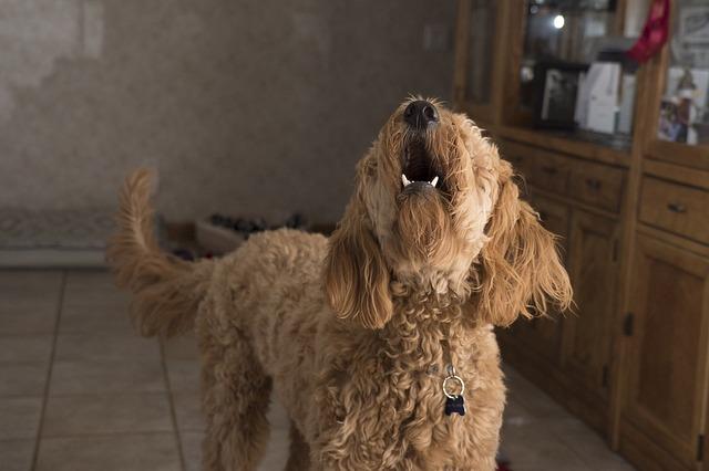 Dog Barking (2)