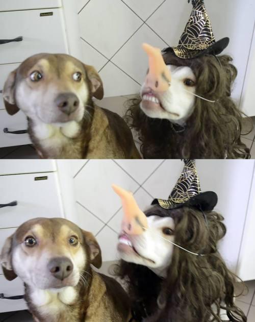 Funny dog pic halloween